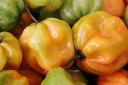 Obst&Gemüse_Nov09 (55)